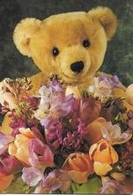 Postcard - Bär  15 x 10,5 cm