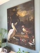 De pelikaan