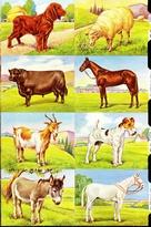 Animals 24 x 15 cm